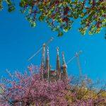 Sagrada Familia with trees
