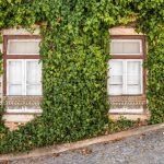 leaves house portugal